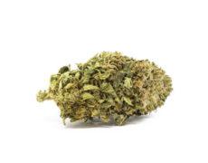 fleur de Sweet Berry canabis légal
