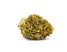 cima lemon cheese cannabis legale