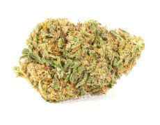 Infiorescenze di cannabis light master kush