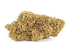 Fiore di marijuana legale Purple GG