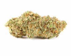 CBD weed Bubblegum