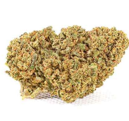 CBD bud of Mango Haze