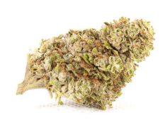 Zkittles CGB fleur de cannabis sans THC