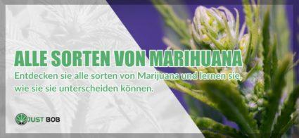Alle Sorten von cannabis