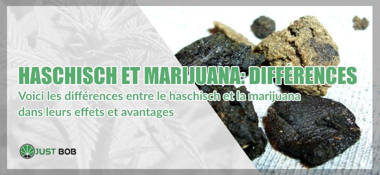 Voici les différences entre le haschisch et la marijuana dans leurs effets et avantages