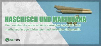 Haschisch und Marihuana: alle Unterschiede