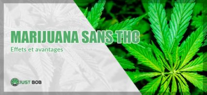 Effets et avantages du cannabis sans THC