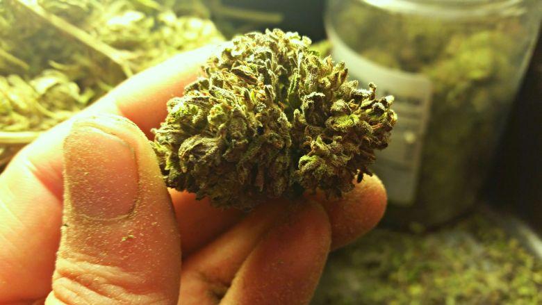 Marijuana dans la sang