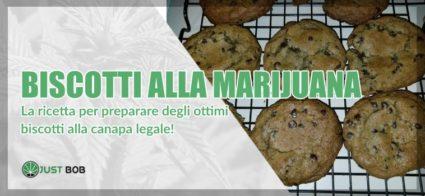 Biscotti alla marijuana: la ricetta per preparare degli ottimi biscotti alla canapa legale!