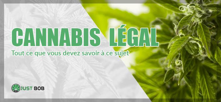 Tout ce que vous devez savoir du cannabi légal