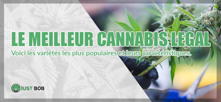 fleurs-de-cannabis-meilleur