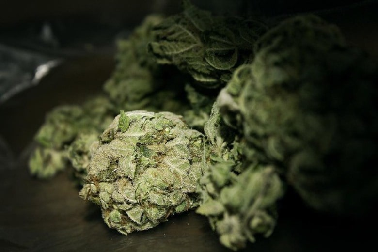 Qu'est-ce que le THC? Fleurs de marijuana