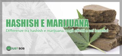 differerenze tra hashish e marijuana, negli effetti e nei benefici