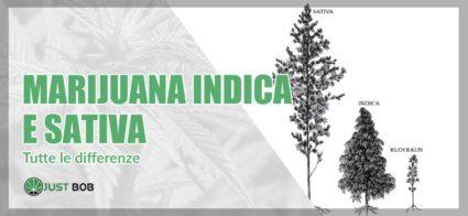 Tutte le differenze tra marijuana indica e sativa