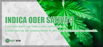 Cannabis kann typ Indica oder Sativa sein.