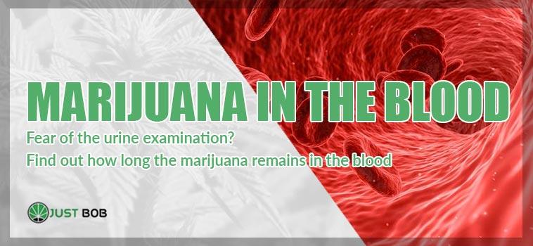 marijuana in the blood