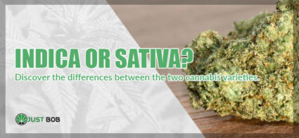 Discover the differences between the two cannabis varieties