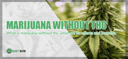 What is marijuana withour thc, what are its effects and benefits