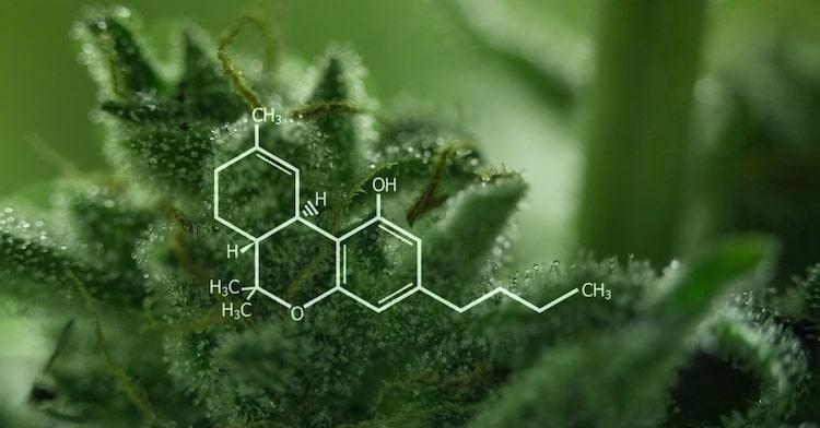Cosa è il THC?