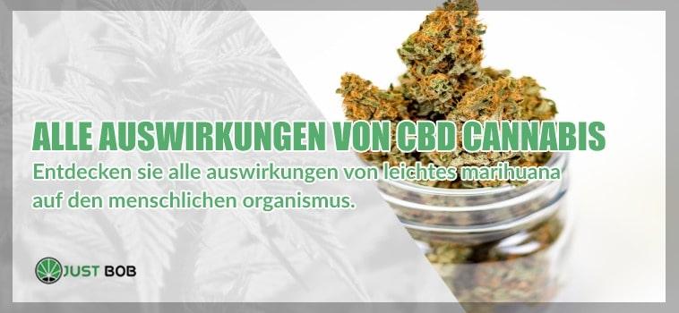 Alle auswirkungen von cbd cannabis