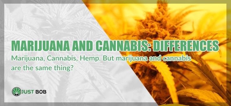 Differences between marijuana and cannabis