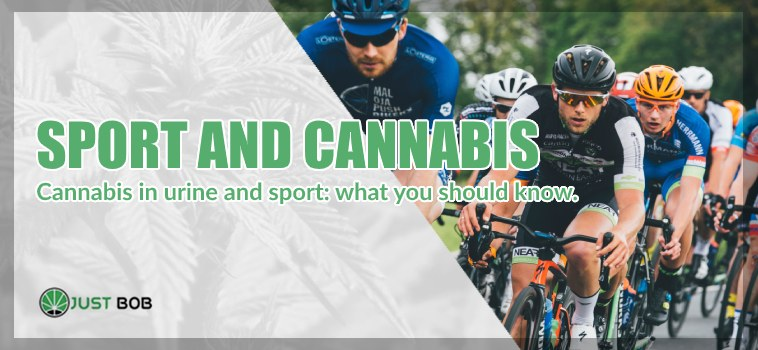 CANNABIS IN URINE AND SPORT: WHAT YOU SHOULD KNOW.