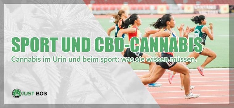 Cannabis im Urin und beim sport: was sie wissen müssen