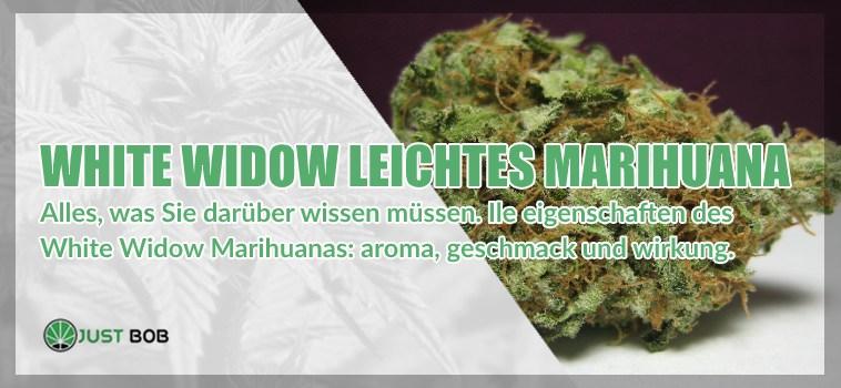 White Widow Marihuana: Alles, was Sie darüber wissen müssen.