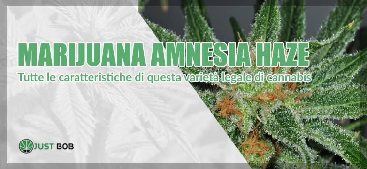 Tutte le caratteristiche di questa varietà legale di cannabis