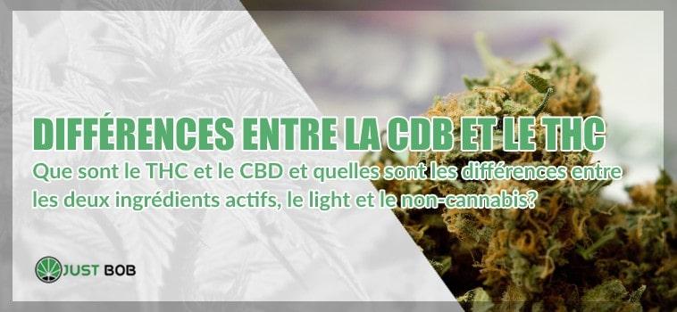 THC et CBD: différences
