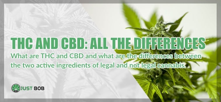 THC and CBD: what are they? Here are all the differences