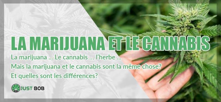 Différences entre Marijuana et Cannabis
