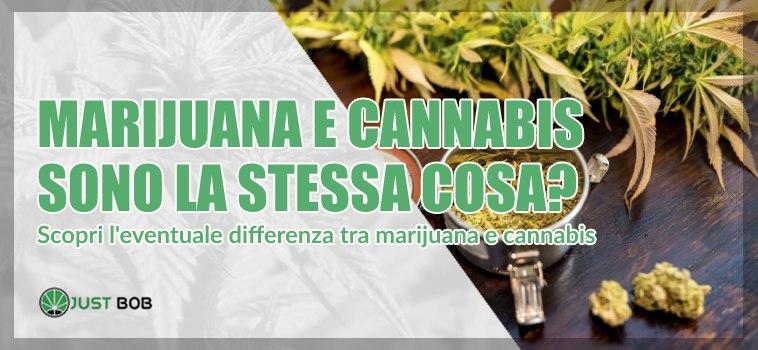 Scopri differenze tra marijuana e cannabis
