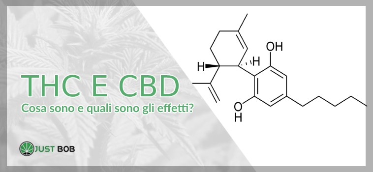 THC e CBD: differenze