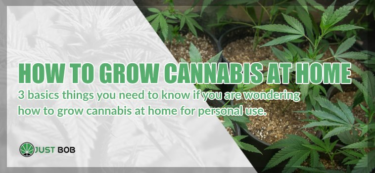 How to grow cannabis CBD at home without breaking the law