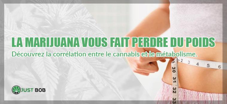 Découvrez la corrélation entre le cannabis CBD et le métabolisme