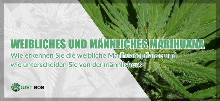 Cannabis CBD: alle Unterschiede