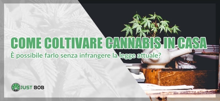 Cannabis CBD : coltivarla in casa