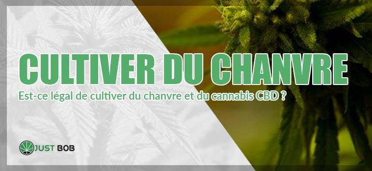 Est-ce légal cultiver du chanvre et du cannabis CBD?
