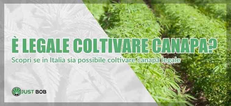 Scopri se è legale coltivare canapa