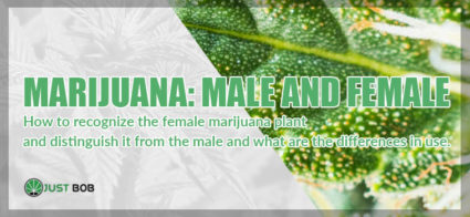 All the differences between male and female marijuana