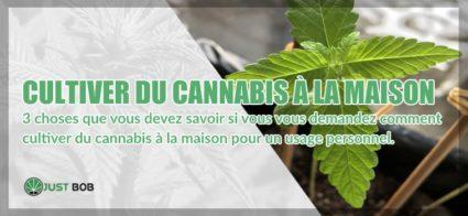 Cultiver du Cannabis CBD à la maison