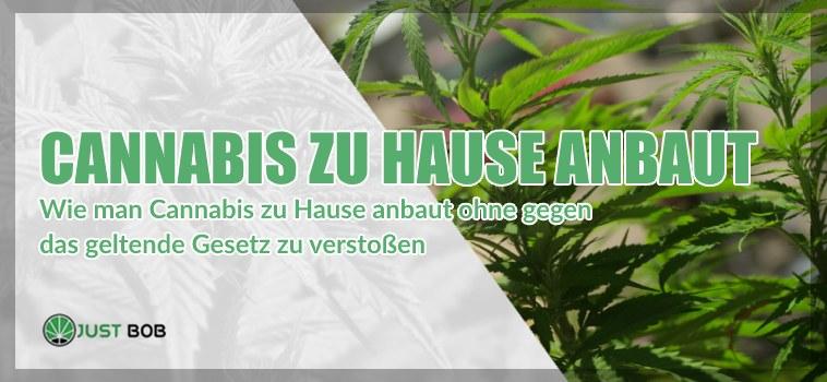 Wie man Cannabis CBD zu Hause anbaut