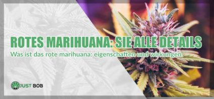 Rotes Marihuana: Sie alle Details
