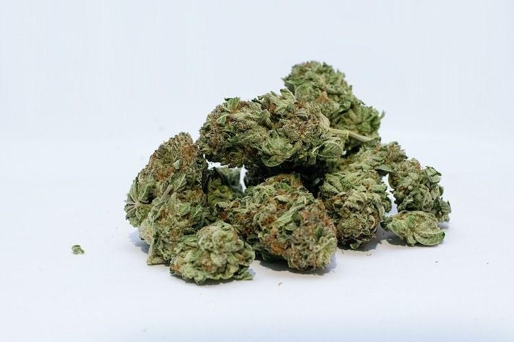 Die Cannabis CBD