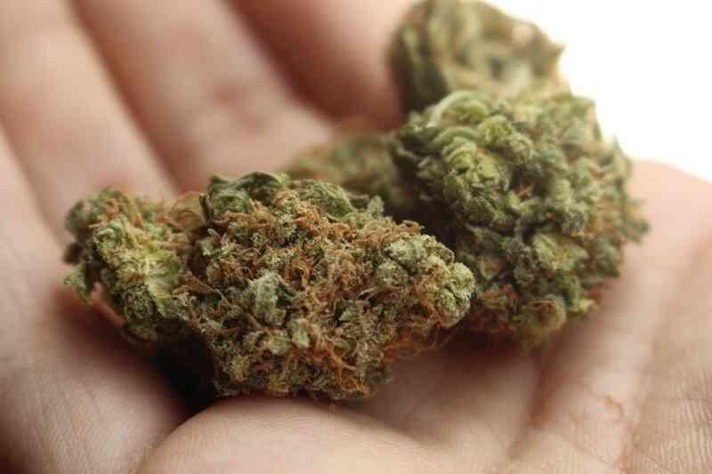 Cannabis Cbd Bluten und tisane