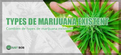 Les types de marijuana existents