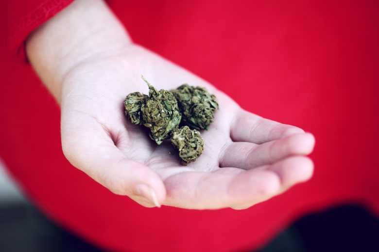 Come coltiviamo la cannabis light?
