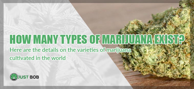 Discover all different types od Marijuana