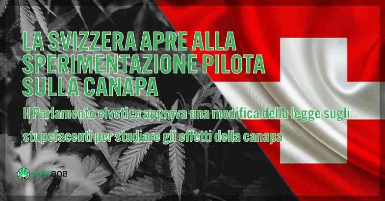 La Svizzera si apre all'esperimento della cannabis.